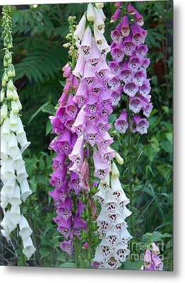Foxglove After The Rains Metal Print by Eunice Miller