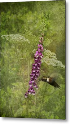 Foxglove Queen Ann's Lace And The Hummingbird Metal Print by Diane Schuster