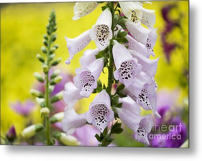 Foxgloves Metal Print by Tim Gainey