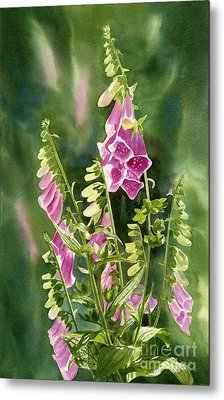 Foxgloves With Background Metal Print by Sharon Freeman