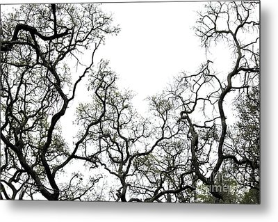 Fractal Branches Metal Print by Theresa Willingham