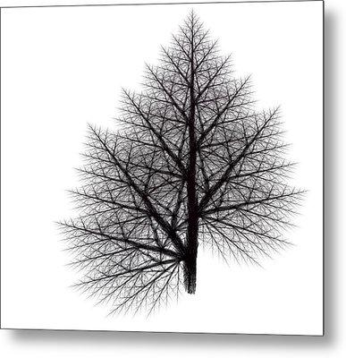 Fractal Essence Of A Tree Metal Print by Richard Ortolano