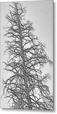 Fractal Tree Abstract Metal Print by Steve Ohlsen