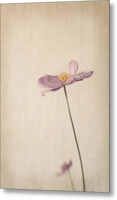 Fragility Metal Print by Amy Weiss