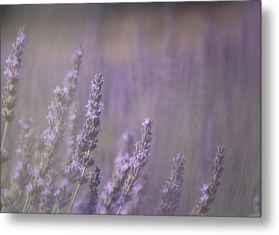 Fragrance Metal Print by Lynn Sprowl
