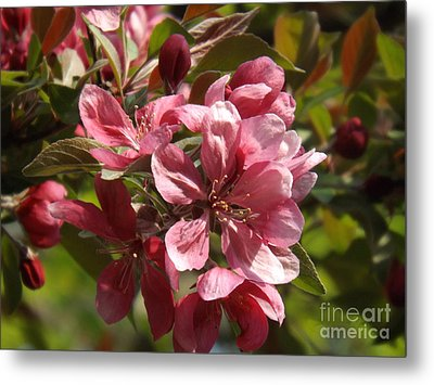Fragrant Crab Apple Blossoms Metal Print by Brenda Brown