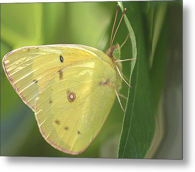 Metal Print featuring the photograph Frail Beauty by The Art Of Marilyn Ridoutt-Greene