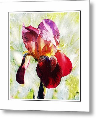 Framed Iris Metal Print