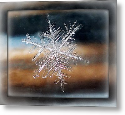 Metal Print featuring the photograph Framed Snowflake by Lorella  Schoales