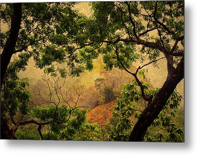 Framing Tree Branches Metal Print by Jenny Rainbow
