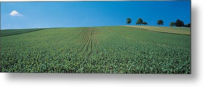 France, Alsace Metal Print by Panoramic Images