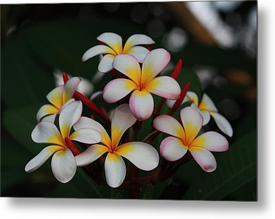 Metal Print featuring the photograph Frangipani Bouquet by Keith Hawley
