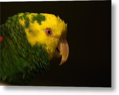 Metal Print featuring the photograph Fred The Amazon Parrot by Melissa Messick