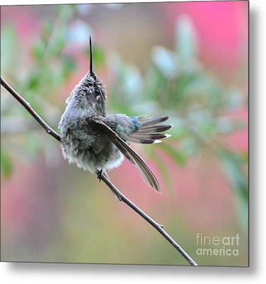 Metal Print featuring the photograph Fredrick Singing In The Rain by Debby Pueschel