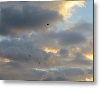 Metal Print featuring the photograph Free As A Bird by Jean Marie Maggi