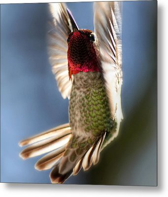 Free Falling Metal Print by Melanie Lankford Photography