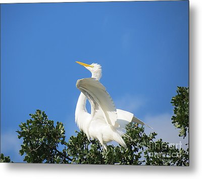 Free To Fly Metal Print by Feva  Fotos