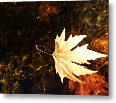Freedom Metal Print by Lucy D