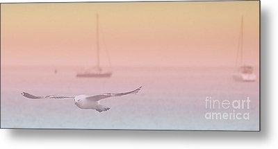 Freedom Of Flight Metal Print