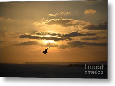 Freedom Metal Print by OUAP Photography
