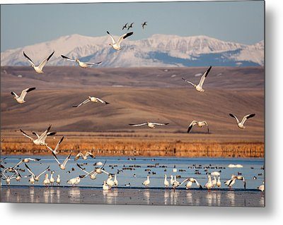 Metal Print featuring the photograph Freeze Out Lake Morning by Jack Bell