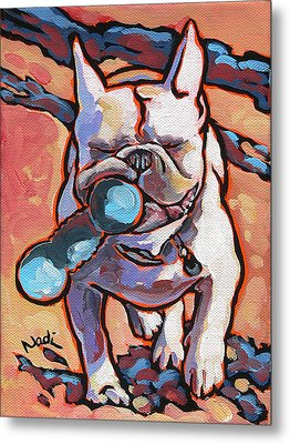 French Bulldog And Toy Metal Print by Nadi Spencer