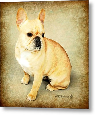 Metal Print featuring the photograph French Bulldog Antique by Barbara Chichester