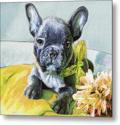 French Bulldog Puppy Metal Print by Jane Schnetlage