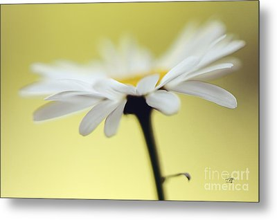 Fresh As A Daisy Metal Print by Lois Bryan