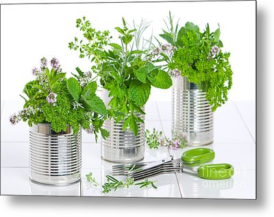 Fresh Herbs In Recycled Cans Metal Print by Amanda Elwell