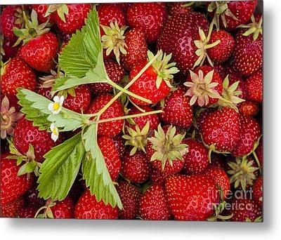 Fresh Picked Strawberries Metal Print by Elena Elisseeva