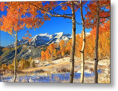 Fresh Snow In The Aspens. Metal Print by Johnny Adolphson
