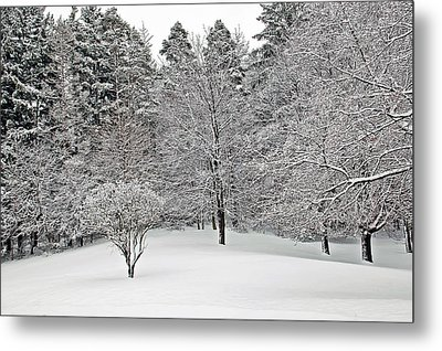 Fresh Snow Scene Metal Print by Aimee L Maher Photography and Art Visit ALMGallerydotcom