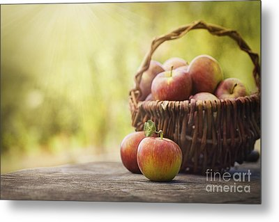 Freshly Harvested Apples Metal Print by Mythja  Photography