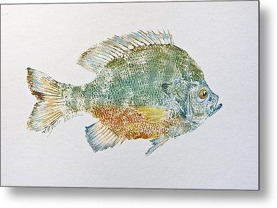 Freshwater Bluegill Metal Print by Nancy Gorr