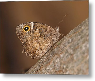 Freyer's Grayling Metal Print