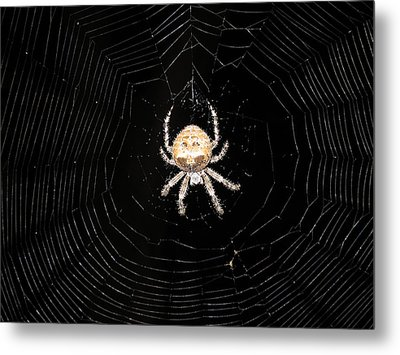 Friend At Indian Gardens Metal Print