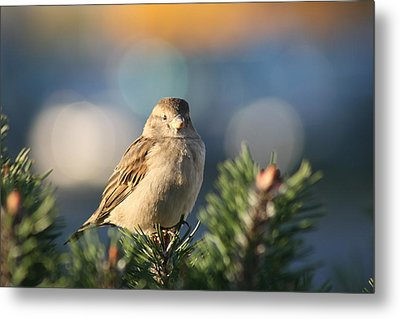 Friendly Bird Metal Print by Paula Brown