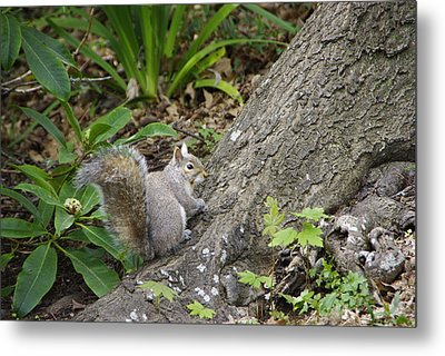 Metal Print featuring the photograph Friendly Squirrel by Marilyn Wilson