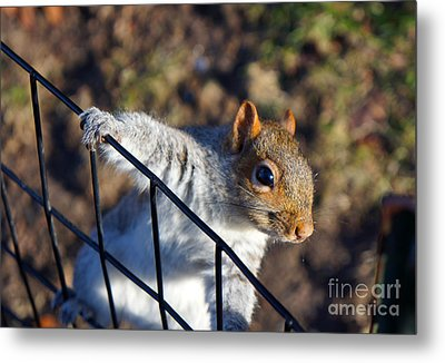 Friendly Squirrel Metal Print
