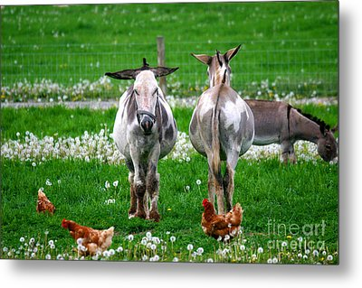Friends Metal Print by Dawn  De Vos