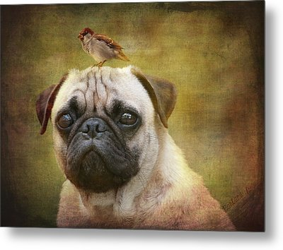 Friends Like Pug And Bird Metal Print by Barbara Orenya