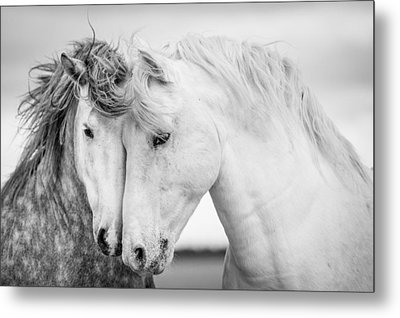 Friends V Metal Print by Tim Booth