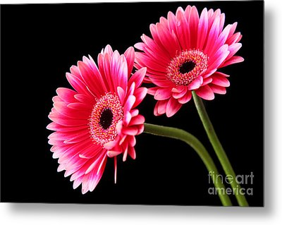 Friendship Metal Print by Eden Baed