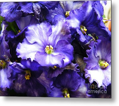 Frills Included Metal Print