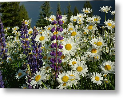 Metal Print featuring the photograph Frisco Flowers by Lynn Bauer