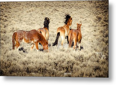 Frisky Mustangs Metal Print by Yeates Photography