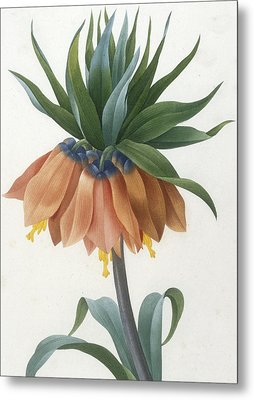 Fritillaire Imperiale Metal Print