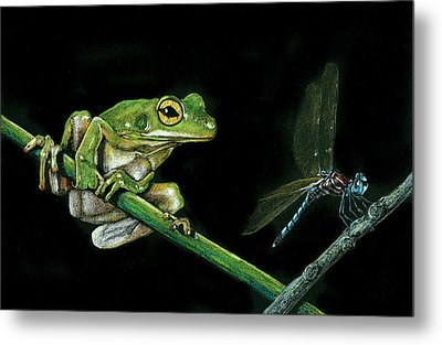 Frog And Dragonfly Metal Print
