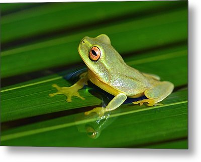 Frog Eye Reflection Metal Print